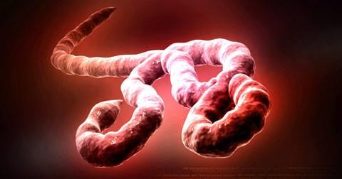 ebolos